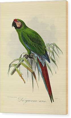 Green Parrot Wood Print by J G Keulemans