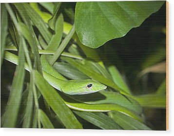 Green Snake Wood Print by Greg Reed