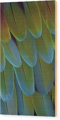 Green-winged Macaw Wing Feathers Wood Print by Darrell Gulin