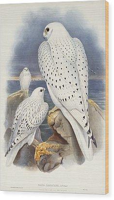 Greenland Falcon Wood Print by John Gould