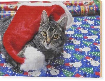 Grey Tabby Cat With Santa Claus Hat Wood Print by Thomas Kitchin & Victoria Hurst