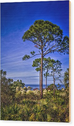 Gulf Pines Wood Print by Marvin Spates