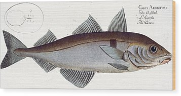 Haddock Wood Print by Andreas Ludwig Kruger