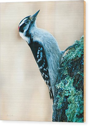Hairy Woodpecker Wood Print by Bob Orsillo