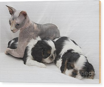 Hanging With The Dogs Wood Print by Jeannette Hunt