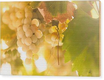 Harvest Time. Sunny Grapes Vi Wood Print by Jenny Rainbow