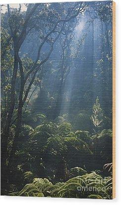 Hawaiian Rainforest Wood Print by Gregory G. Dimijian, M.D.