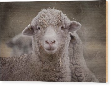 Hay Ewe Wood Print by Michelle Wrighton