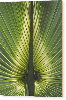 Heart Of Palm Wood Print by Roger Leege