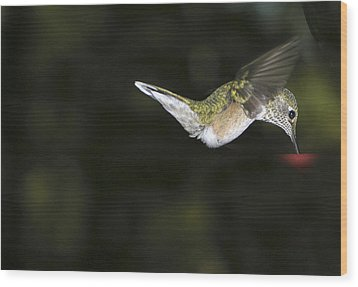 Hovering Beauty Wood Print by Ron White