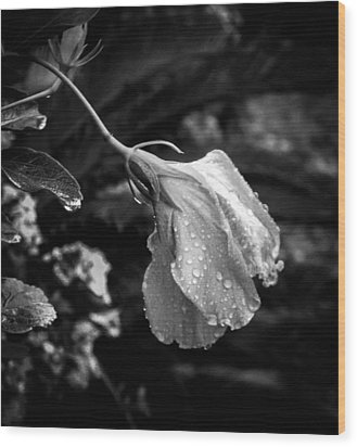 Humbled By The Rain Wood Print by Christy Usilton