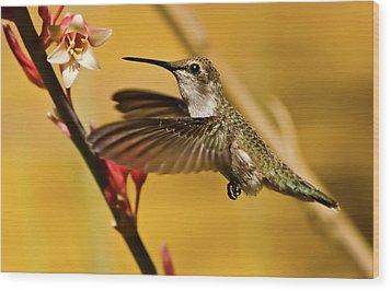 Hummingbird Wood Print by Robert Bales