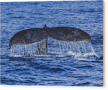 Humpback Whale Tail Fluke During Deep Dive Wood Print by Puget  Exposure