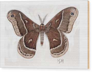 Hyalophora Cecropia/gloveri Hybrid Moth Wood Print by Inger Hutton