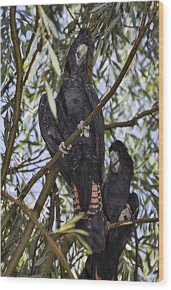 I Say Old Chap Wood Print by Douglas Barnard