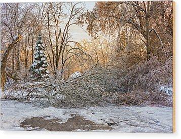 Ice Storm...day 2 Wood Print by Steve Harrington