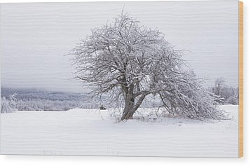 Iced Over Wood Print by Patrick Downey