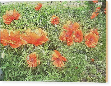 In Flanders Fields The Poppies Grow Wood Print by PainterArtist FIN