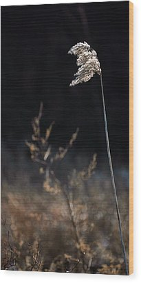 In The Wind Wood Print by JC Findley