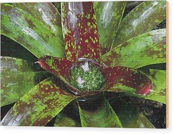 Inca Bromeliad Detail Wood Print by Gerry Ellis