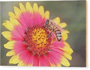 Indian Blanket Aka Firewheel And Bee Wood Print by Lorri Crossno