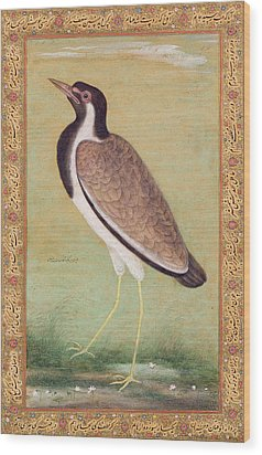 Indian Lapwing Wood Print by Mansur