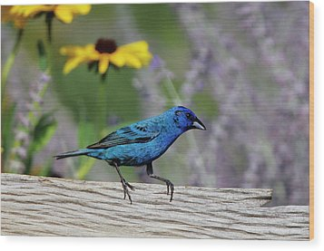 Indigo Bunting (passerina Cyanea Wood Print by Richard and Susan Day