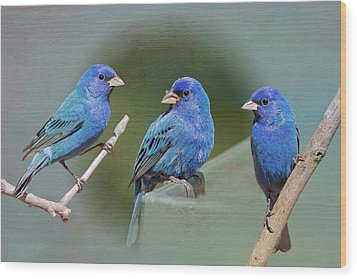 Indigo Buntings Wood Print by Bonnie Barry