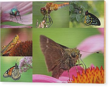 Insect Macro Photography Art Wood Print by Juergen Roth