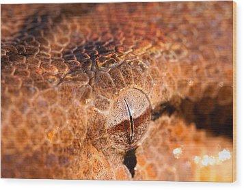Iridescent Stare Wood Print by Jeff Sinon