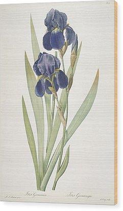 Iris Germanica Bearded Iris Wood Print by Pierre Joseph Redoute
