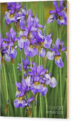 Irises Wood Print by Elena Elisseeva