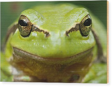 It's Not Easy Being Green _ Tree Frog Portrait Wood Print by Roeselien Raimond