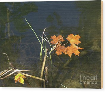 It's Over - Leafs On Pond Wood Print by Brenda Brown