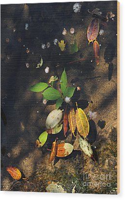 June Gathering 2 Wood Print by Gregory Arnett