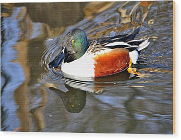 Just Ducky Wood Print by Marty Koch