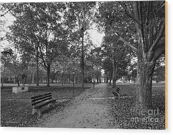Kenyon College Middle Path Wood Print by University Icons