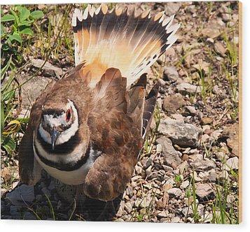 Killdeer On Its Nest Wood Print by Chris Flees