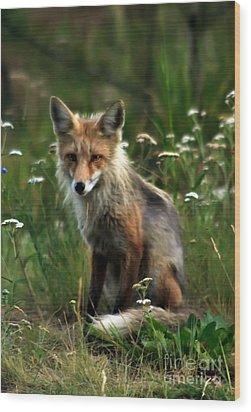 Kit Red Fox Wood Print by Robert Bales