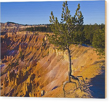 Know Your Roots - Bryce Canyon Wood Print by Jon Berghoff