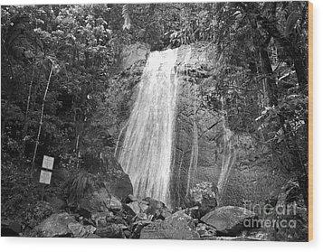 La Coca Falls El Yunque National Rainforest Puerto Rico Print Black And White Wood Print by Shawn O'Brien