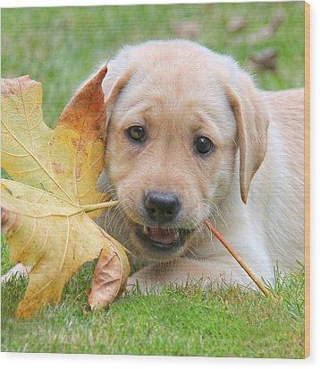 Labrador Retriever Puppy With Autumn Leaf Wood Print by Jennie Marie Schell