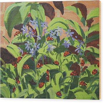 Ladybirds Wood Print by Andrew Macara