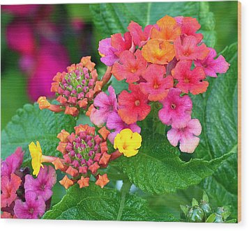 Lantana Wood Print by Rona Black