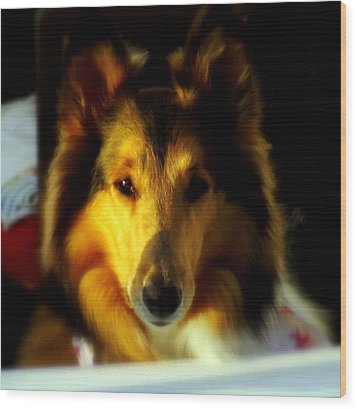 Lassie Come Home Wood Print by Karen Wiles