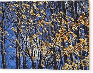 Late Fall Wood Print by Elena Elisseeva