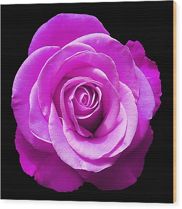 Lavender Rose Wood Print by Aimee L Maher Photography and Art Visit ALMGallerydotcom