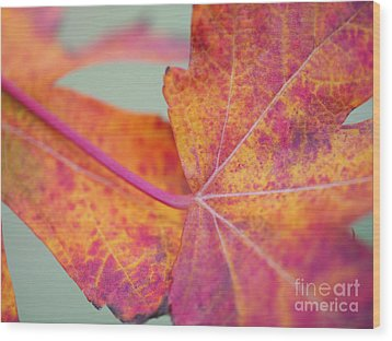 Leaf Abstract In Pink Wood Print by Irina Wardas