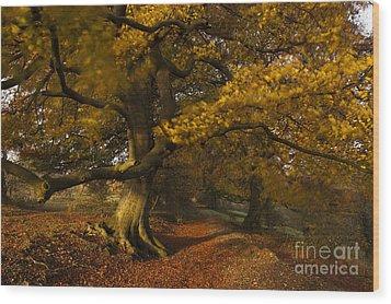Leafy Lane Wood Print by Anne Gilbert