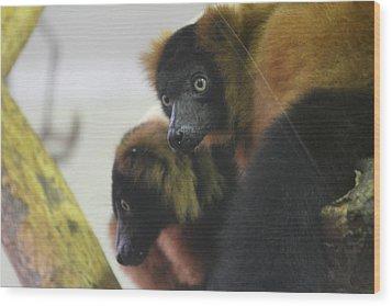 Lemur - National Zoo - 01131 Wood Print by DC Photographer